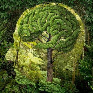 mentaliste arbre